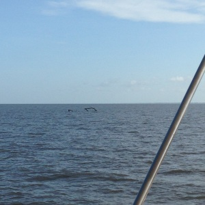Lake Okeechobee, can you find the top of a sunk shrimp boat?