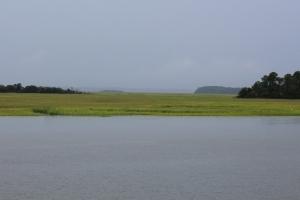 Endless marsh grass
