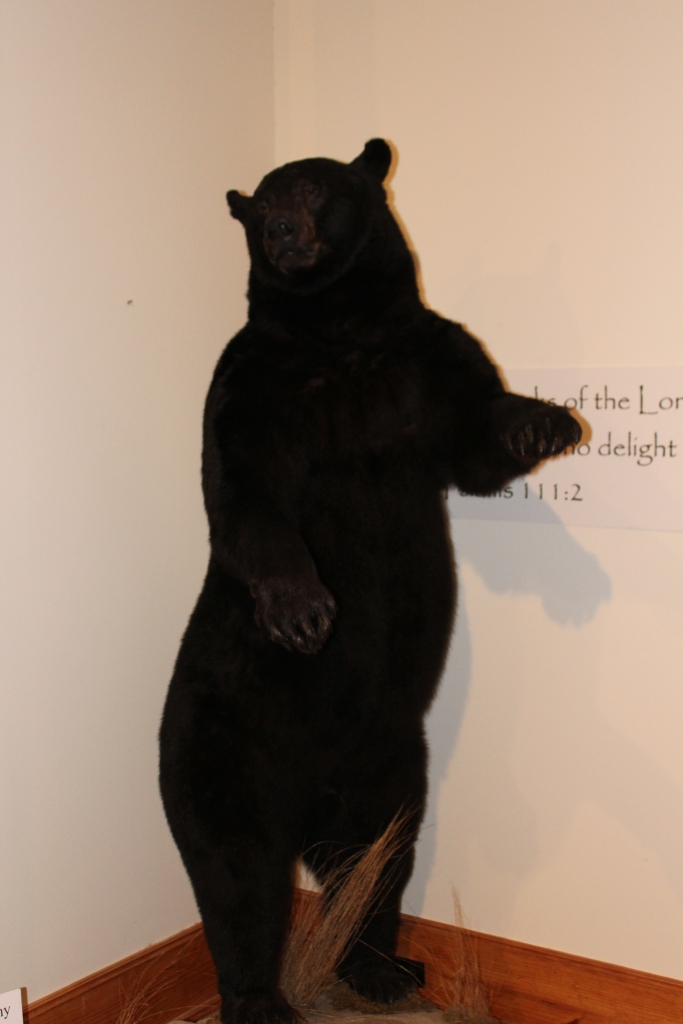 708 lbs Black Bear, taken by owners daughter. Set youth and female record in N.C.
