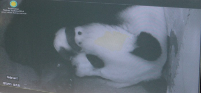 Mom and baby on Panda Cam