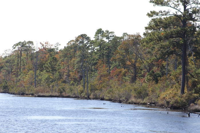 Mile 110 - Alligator River-Pungo River Canaal