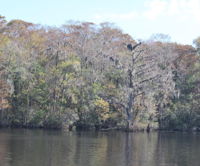 STM 390, Waccamaw River