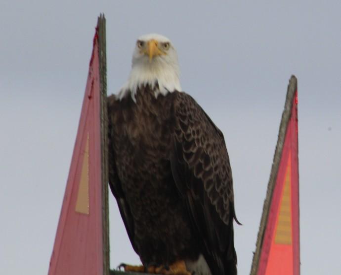 Crew getting the Eagle Eye