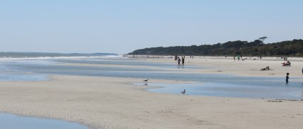 IMG_0026, Sea Pines Beach