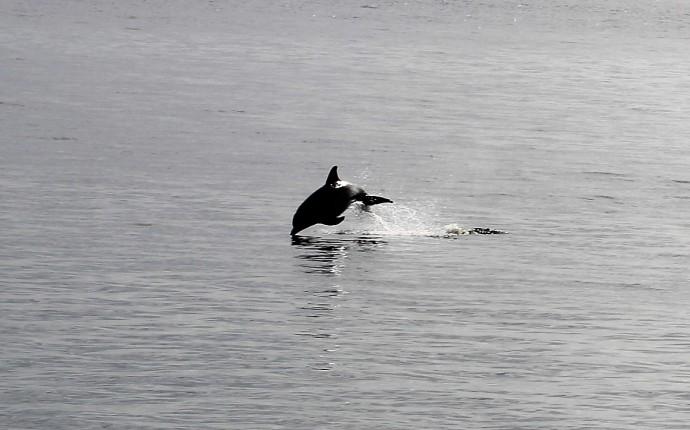 16-dolphin