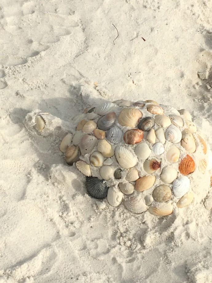 30-turtle