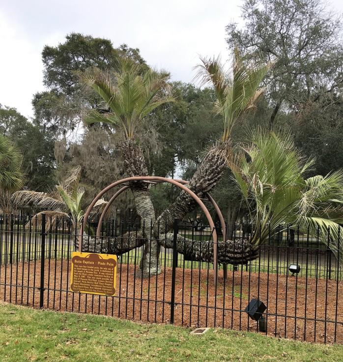 37-palm-tree