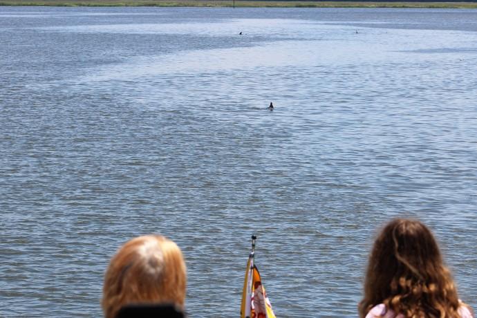 15 Dolphin Watch