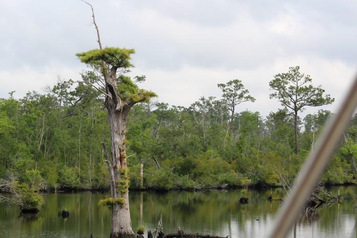 8 Cypress Swamp