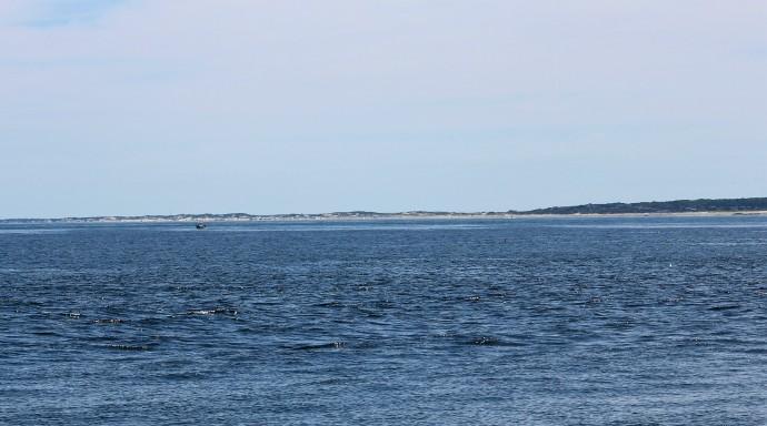 115 Cape Cod.JPG