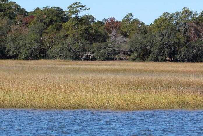 13 SC salt marsh
