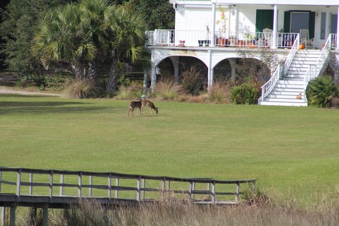 17 Deer
