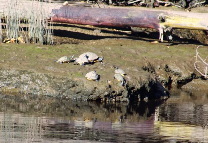 25 Turtles
