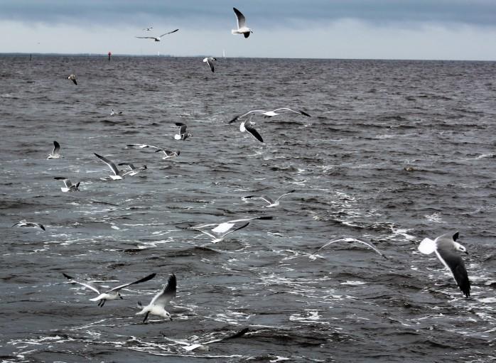 6 Gulls