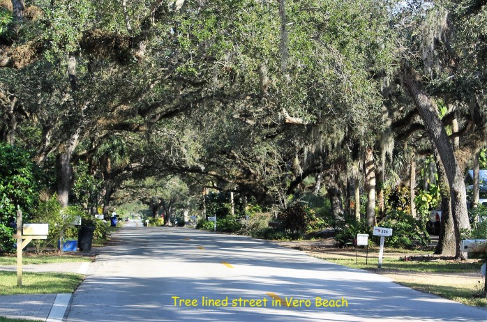 17 Vero Beach Tree lined street