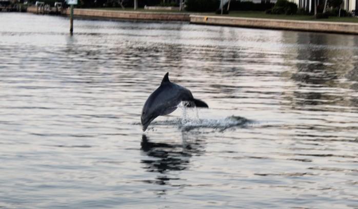 21 Dolphin Show