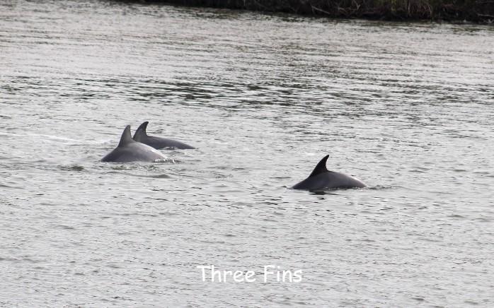 7 Dolphins.JPG