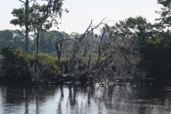 15 in Cyprus Swamp