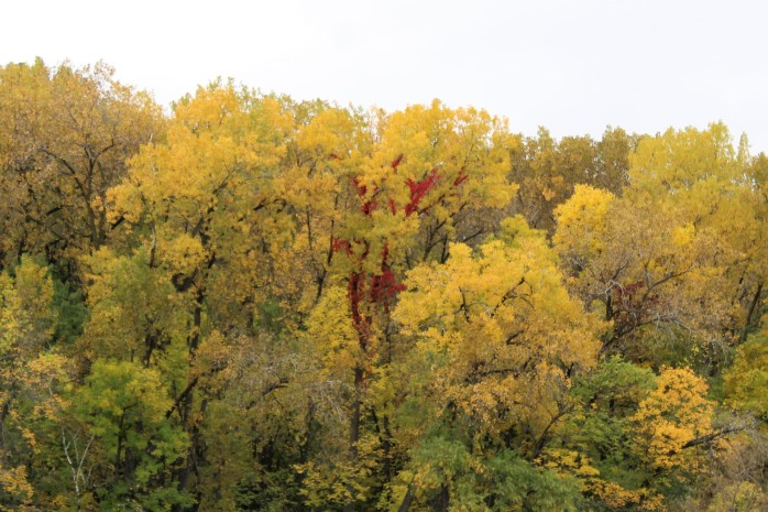 2 Yellow with red trunk