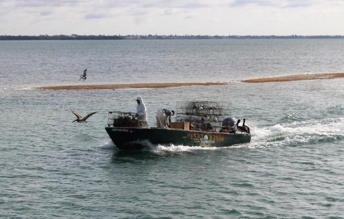 10 pelican rest