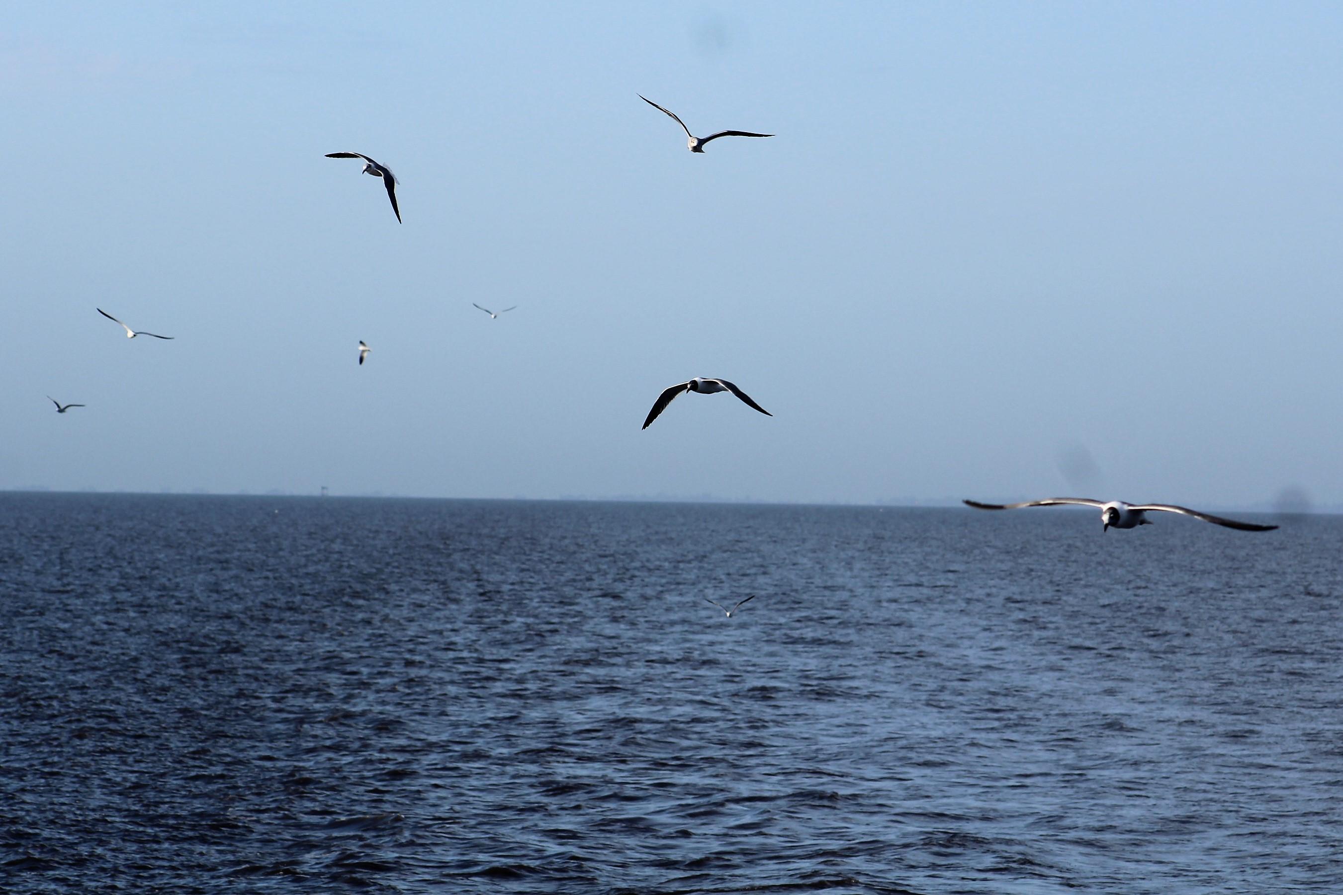 13 Birds following wake
