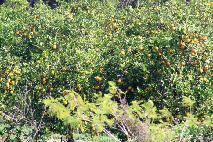 4 Orange Grove